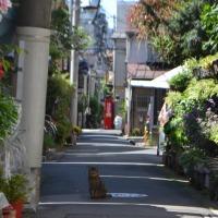 Partir 9 Jours au Japon : Pourquoi? Quand? Comment? Quel budget?